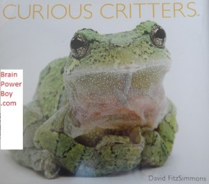Curious Critters cover photo