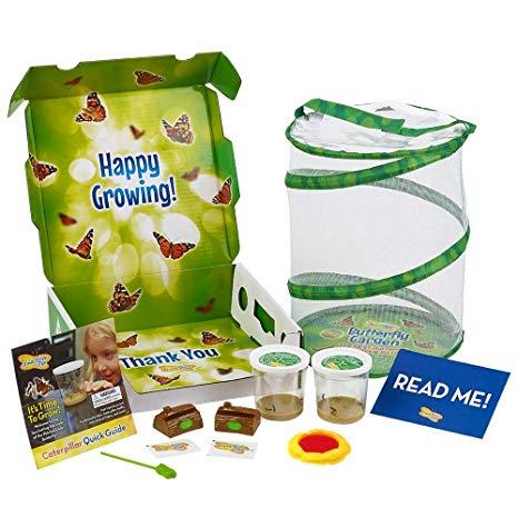 Deluxe Butterfly Kit