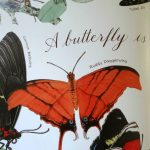 A Butterfly is Quiet Book Inside Page