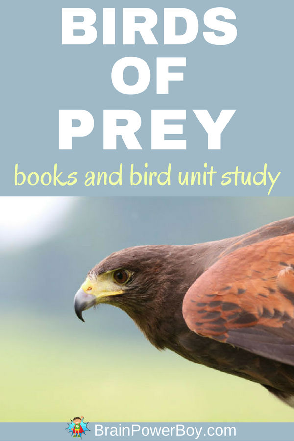 The very best Birds of Prey Books are found in this list! Includes bird unit study too. Click to read.