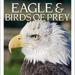 dk-eyeswitness-eagle-birds-of-prey