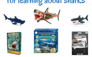 Educational Shark Toys for Learning About Sharks