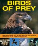 exploring-nature-birds-of-prey