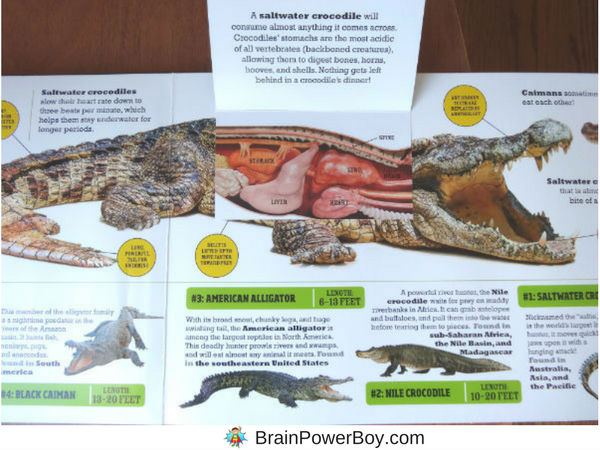 Take a peak inside the highly engaging interactive book Deadly Predators from the new Scanorama series from Silver Dolphin Books